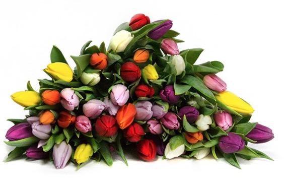 50 Tulpen im Strauß