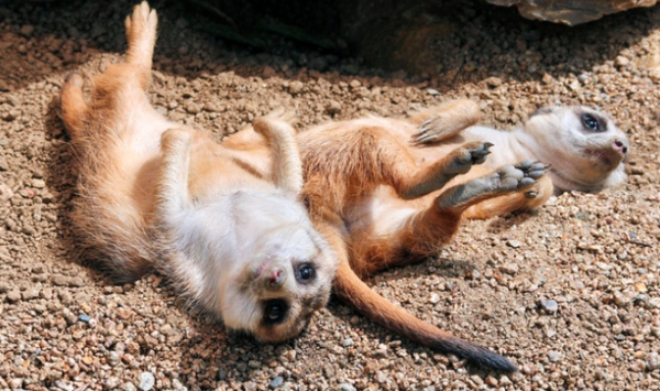 frankfurter zoo groupon