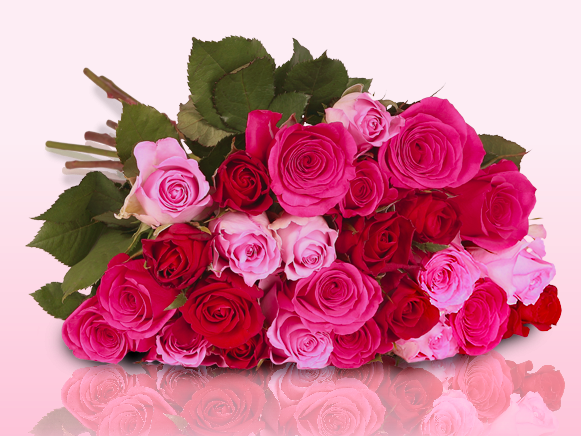 miflora rosen