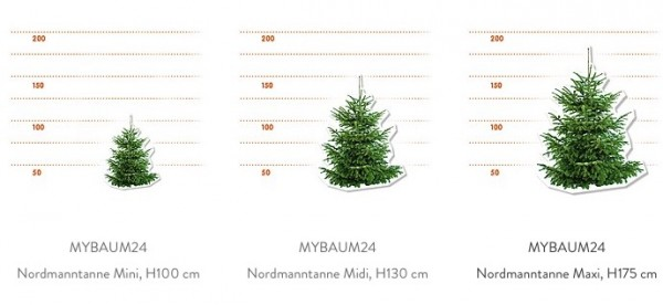 MyBaum24