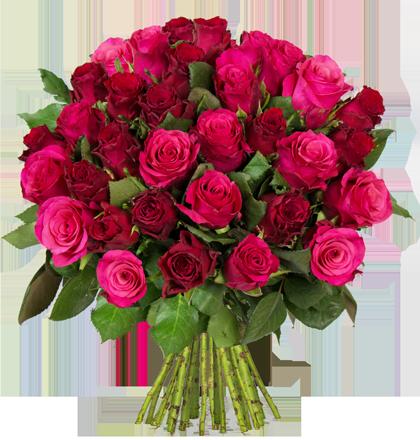 rosen-dolcevita_2