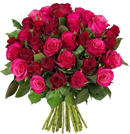 2017-10-12 09_54_41-rosen-pink-rot.jpg (420×440)