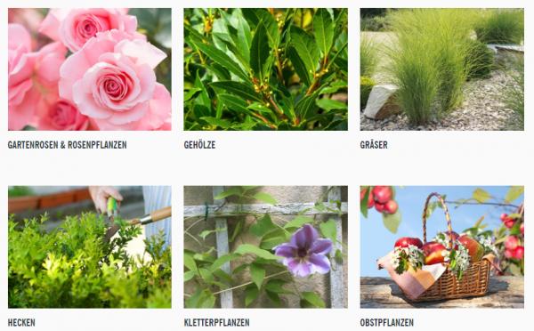 2018-03-09 10_06_10-Pflanzen & Pflanzenschutz - Lidl Deutschland - lidl.de